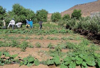 Les revenus agricoles améliorés de 66%  et 48 millions de journées de travail créées