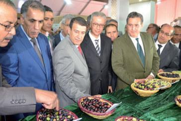 Une production d'environ 2 millions de tonnes au titre de l'actuelle campagne : Une bonne année pour l'olivier