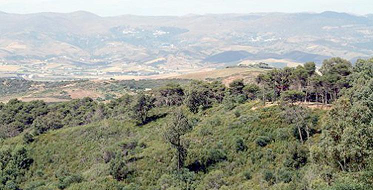 La campagne de plantation forestière 2018-2019 lancée à Settat