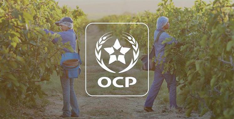 OCP accompagne plus de 500 agriculteurs à Taounate