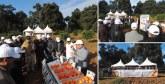 De nouvelles variétés d'agrumes mises en avant à Larache