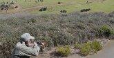 Souss-Massa : Plus de 180 sangliers abattus en une semaine
