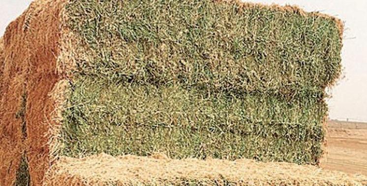 Cultures fourragères : Près de 2 millions de tonnes produites dans la région Fès-Meknès