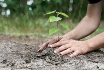 3.000 arbres plantés dans la province de Midelt