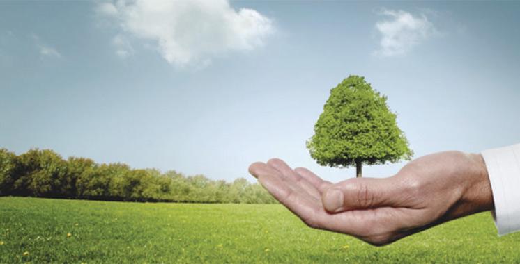 OCP lance une batterie d'actions pour la préservation et l'amélioration de la biodiversité