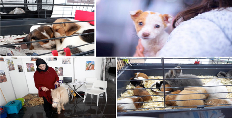 Le Salon «Animaly» fait ses débuts : Les animaux de compagnie à la fête
