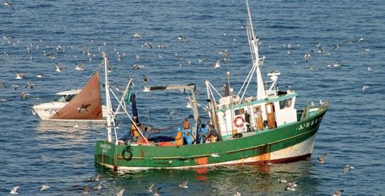 Pêche côtière et artisanale : Stagnation des débarquements en 2018
