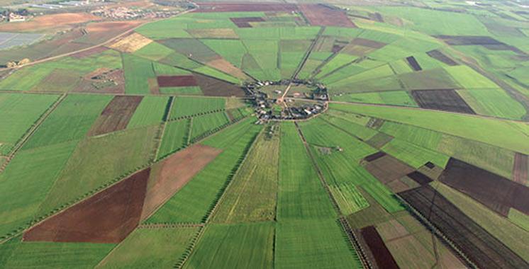 Malgré la baisse des températures, la campagne agricole à  Rabat-Salé-Kénitra se déroule dans des «conditions normales»