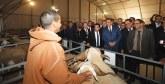 Un 2ème Salon national professionnel dédié : 20% de l'effectif national en Sardi provient de la province de Settat
