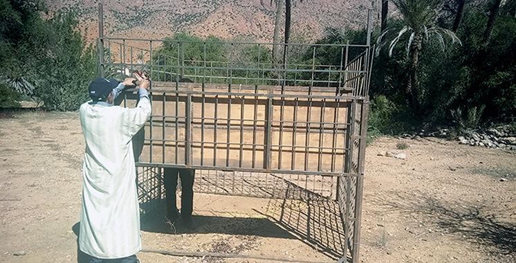 Lutte contre le sanglier : L'Andzoa lance un projet pilote pour la protection des périmètres agricoles