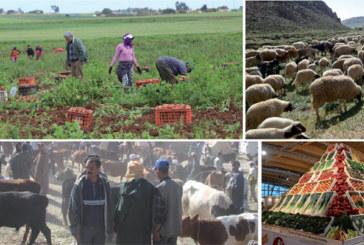 A la veille de la fin du Plan agricole régional (PAR) : Casablanca-Settat se tourne vers la  valorisation et la commercialisation des produits agricoles