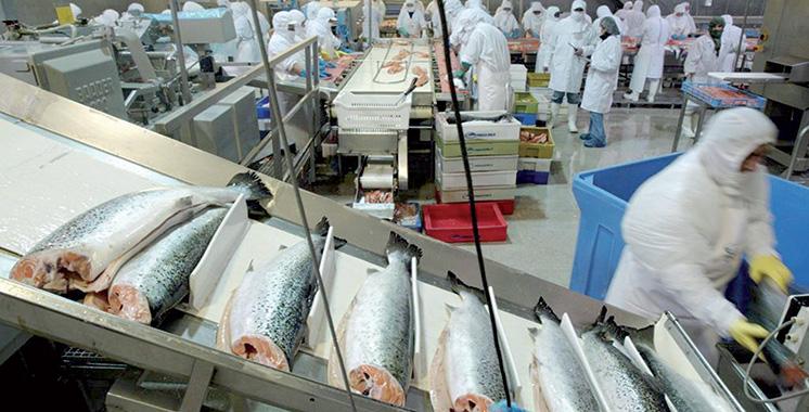 Industries de la pêche : Les Danois prospectent à Agadir