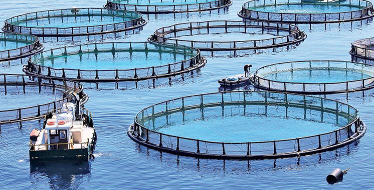 Assurance : BeAssur lance une couverture pour l'aquaculture