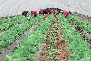 Agriculture bio : L'expérience marocaine vue par Oxford Business Group