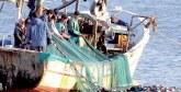 Pêche côtière et artisanale : Hausse  de 19% des débarquements au T1-2019