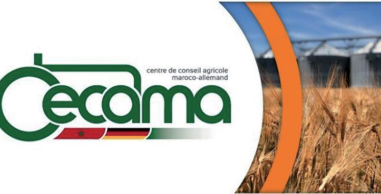 La journée maroco-allemande du bovin jeudi prochain à Kénitra
