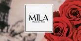 Mila ou l'aventure de la rose éternelle
