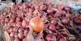 L'entrée progressive de la production de l'oignon équilibrera le marché