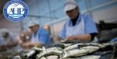 Sécurité sanitaire des produits halieutiques : Mise en service du premier laboratoire d'analyse d'autocontrôle d'histamine