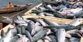 Pêche : Le Maroc va mettre en place un nouveau système de pesage des captures