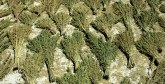 Saisie de plus de quatre tonnes  de résine de cannabis près d'Asilah