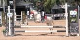 Equitation  : Le CAFC Masters lance sa 4ème édition