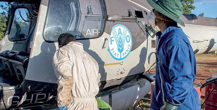Criquet pèlerin : La FAO réunit les experts  de la région occidentale à Agadir