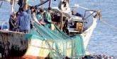 Pêche côtière et artisanale : Hausse de 6% des débarquements à fin août