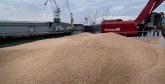 Commercialisation des céréales : De nouvelles mesures appliquées  depuis le 1er juin