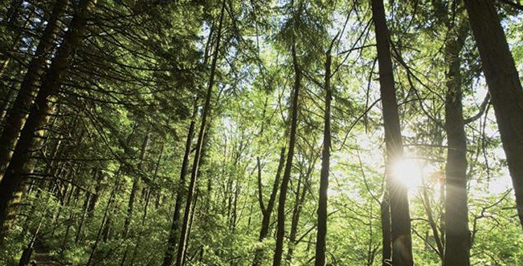 Forêts : Le Maroc présente sa stratégie à la FAO