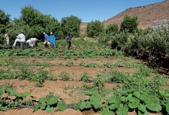 Crédit Agricole  du Maroc : L'accompagnement du monde rural salué par les députés