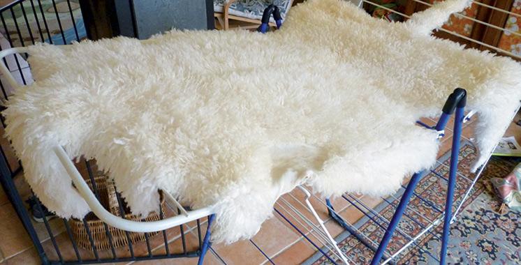 Pendant le jour de l'Aïd : Offrez un bon salage à la peau de votre mouton après abattage !