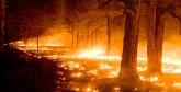 Incendies de forêts : 201 ha ravagés du 1er janvier au 3 juillet