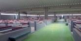 Pour un investissement total de 33 millions DH : Un marché aux bestiaux dernier cri voit le jour à Laâyoune