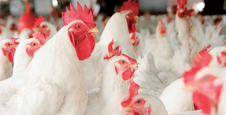 Commercialisation et abattage de volailles :  Les producteurs rassurent