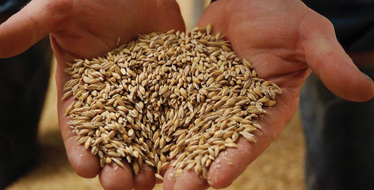Semences certifiées de céréales: Plus de 2,1 millions de quintaux disponibles