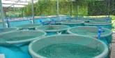 L'agence de l'aquaculture lance la sélection : 250 investisseurs retenus  dans 4 régions