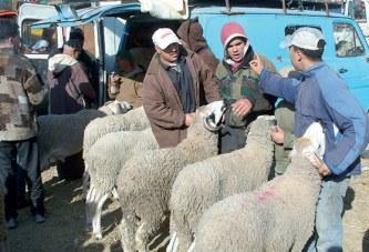 Aïd Al Adha : Près de 8,5 millions  de têtes de cheptel disponibles
