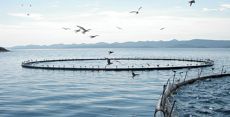 Aquaculture : Le Souss-Massa veut devenir pionnier au niveau national