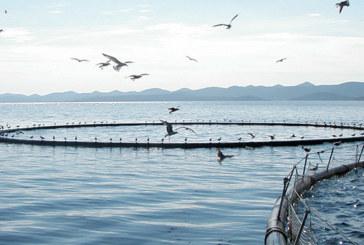 Aquaculture : Le Souss-Massa veut devenir pionnier au niveau national