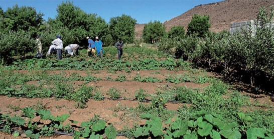 Agadir en était l'hôte : Un symposium international pour dessiner des écosystèmes agro-urbains résilients