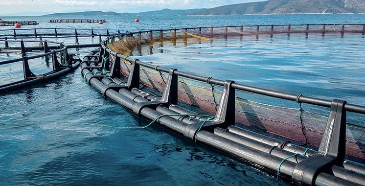 Aquaculture : L'ANDA lance un programme d'appui spécifique aux projets mytilicoles à Agadir