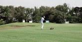 Golf : La 1ère édition de «Lalla Aïcha Challenge Tour»  du 3 au 6 octobre  à Rabat