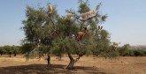 L'impact du PAMPAT sur les filières de l'arganier  et du cactus dévoilé par l'ADA