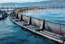 L'ANDA étudie les pistes de développement mytilicole en offshore dans le Souss
