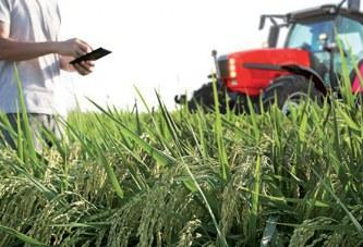 Campagne agricole 2019-2020 – Crédit Agricole du Maroc :  Le dispositif