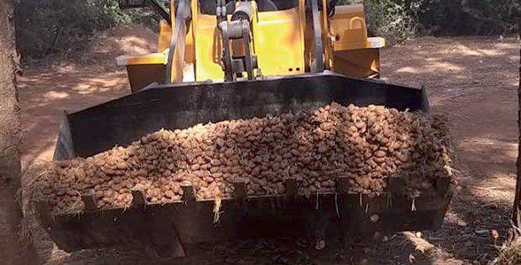 Destruction à Berkane de 136 tonnes de pommes de terre traitées avec des pesticides non homologués