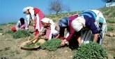 Education, santé et emploi des femmes rurales : Les constats inquiétants du HCP