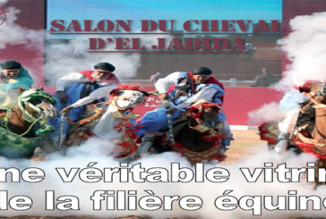 Spécial – Salon du cheval  d'el Jadida : Une véritable vitrine de la filière équine