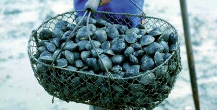 La récolte et la commercialisation des coquillages d'Imi Ouaddar interdites